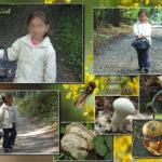 Aux champignons dans le bois du Foriest à Braine-l'Alleud