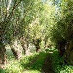 Le splendide chemin du Fourçon. abri de chouettes protégées qui sera détruit dès la phase 1 du tracé du Contournement Ouest de Braine l'Alleud.